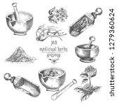 realistic botanical ink sketch... | Shutterstock .eps vector #1279360624