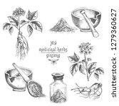 realistic botanical ink sketch... | Shutterstock .eps vector #1279360627
