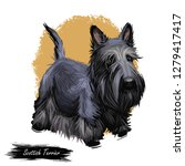 scottish terrier domestic... | Shutterstock . vector #1279417417