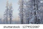 frozen tree trunks  pine trunks ... | Shutterstock . vector #1279522087