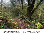 forest landscape of the... | Shutterstock . vector #1279608724