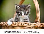 Stock photo little cat in wicker basket on green grass outdoors 127969817