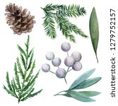 cone  conifer and berries. hand ... | Shutterstock . vector #1279752157