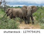 encountered this elephant while ... | Shutterstock . vector #1279754191
