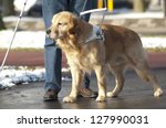 guide dog is helping a blind... | Shutterstock . vector #127990031