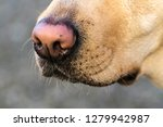 canine snout and mustache | Shutterstock . vector #1279942987