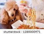 woman enjoy japanese thai meal... | Shutterstock . vector #1280000971