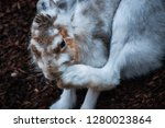 portrait of a brown and white... | Shutterstock . vector #1280023864