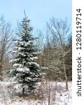 winter forest in the swabian...   Shutterstock . vector #1280119714