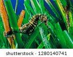 long snouted seahorse along... | Shutterstock . vector #1280140741