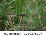 dragonfly up close   Shutterstock . vector #1280276107