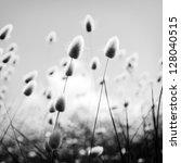 Shallow Focus Of Soft Wild...