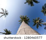 looking up at some beautiful... | Shutterstock . vector #1280460577