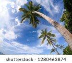 beautiful palm trees from below | Shutterstock . vector #1280463874