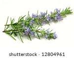 Rosemary Herb Flowering In...