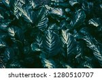 tropical  green leaves in the... | Shutterstock . vector #1280510707