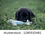 playing labrador puppy ... | Shutterstock . vector #1280532481
