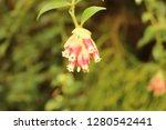 "bunch of pink ""jungle blueberry""...   Shutterstock . vector #1280542441"