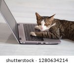 Stock photo the cat is playing a notebook or laptop computer on tile the face of it is very stressful that 1280634214