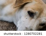 brown dog sleeping on ground...   Shutterstock . vector #1280702281