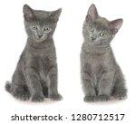 two small gray shorthair kitten ...   Shutterstock . vector #1280712517