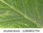 exotic plant close up   Shutterstock . vector #1280802754