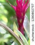 exotic flower close up   Shutterstock . vector #1280802757