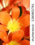 exotic flower close up   Shutterstock . vector #1280802781