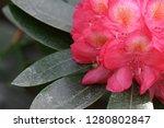 exotic flower close up   Shutterstock . vector #1280802847