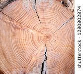 close up cross section of tree...   Shutterstock . vector #1280802874