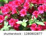 exotic flower close up   Shutterstock . vector #1280802877