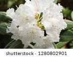 exotic flower close up   Shutterstock . vector #1280802901