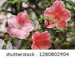 exotic flower close up   Shutterstock . vector #1280802904