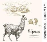 Alpaca. Set Of Vector Sketches...