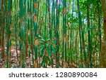 walk in shady tropical forest... | Shutterstock . vector #1280890084