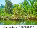 the mangrove forests boast... | Shutterstock . vector #1280890117