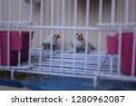finch bird in a cage | Shutterstock . vector #1280962087