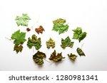 leaf background   grape leaves... | Shutterstock . vector #1280981341