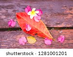 plumeria flowers and frangipani ... | Shutterstock . vector #1281001201
