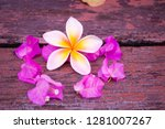 plumeria flowers and frangipani ... | Shutterstock . vector #1281007267