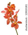Stem Of Orange Orchids Isolate...