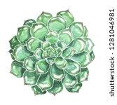 large green succulent hand... | Shutterstock . vector #1281046981