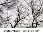 many tangled branches... | Shutterstock . vector #1281136234