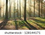 Beautiful Sun Rays In The...