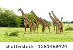 closeup of masai giraffe ... | Shutterstock . vector #1281468424