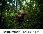 Cute monkey in forest