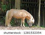 brown equus przewalskii | Shutterstock . vector #1281532354