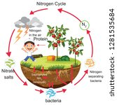 physics   nitrogen cycle... | Shutterstock .eps vector #1281535684