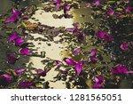 pink flowers falling on water | Shutterstock . vector #1281565051