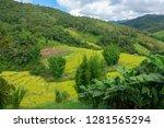 terraced rice field in northern ... | Shutterstock . vector #1281565294